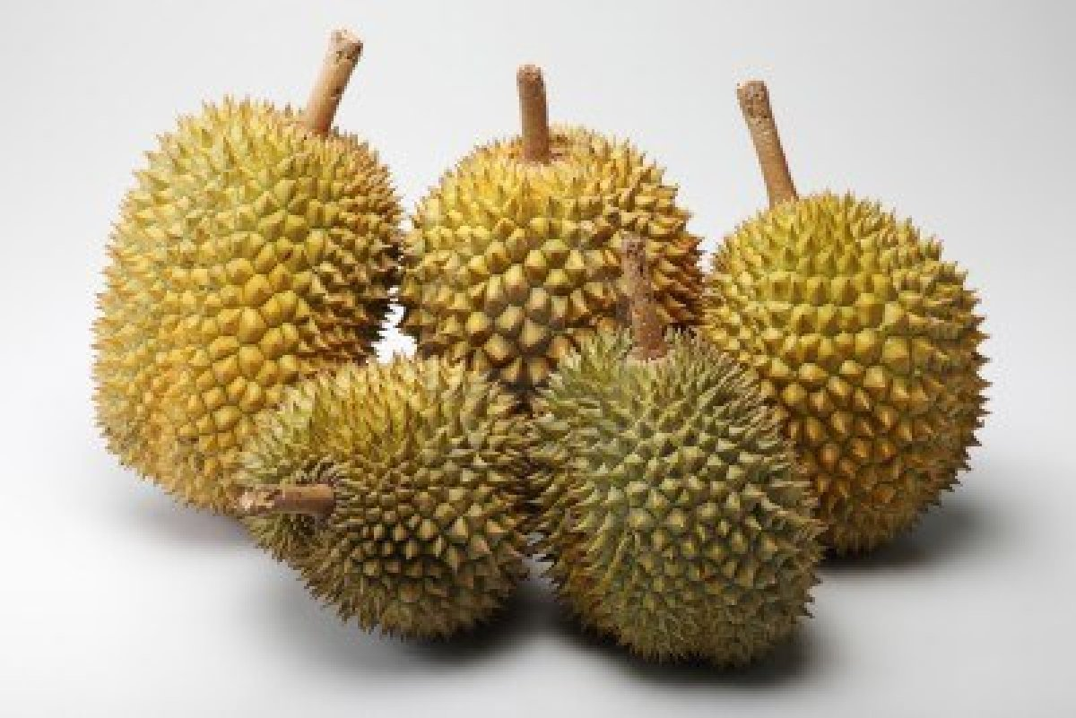 how to draw a durian