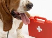 Pet-Health2